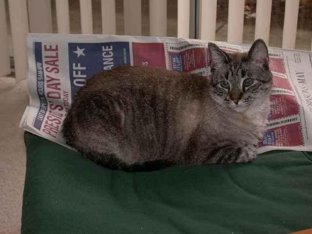 Chessie sitting on the newspaper